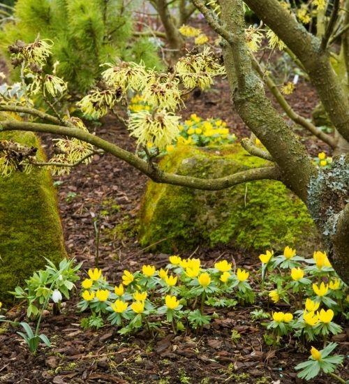 Got the front garden blues? – Try making some of these easy changes to your garden this spring.