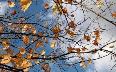 Autumn Is Just Around the Corner