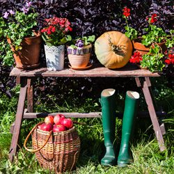 Getting Autumnal Colour in Your Garden