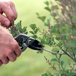 Getting started with pruning