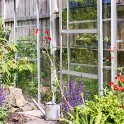 Top tips for great-looking summer flowers