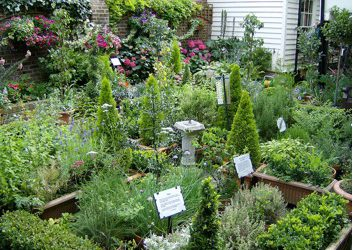 Growing a Herb Garden for Health