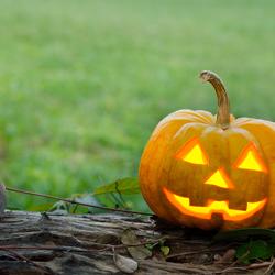Spooky Ideas for a Halloween Garden
