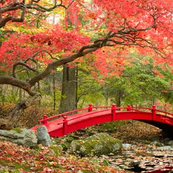What is a Japanese Garden & Inspiration for your Outdoor Space