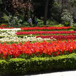 The Landscape Gardens of Madrid