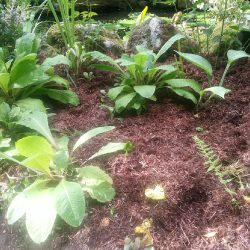 A Word About….Mulching