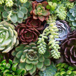 Garden Trends of 2017