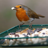 Reasons to get back out in the garden this Easter