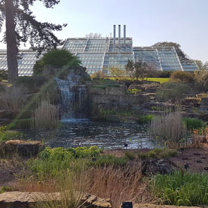 It's blossom time at Kew Gardens!