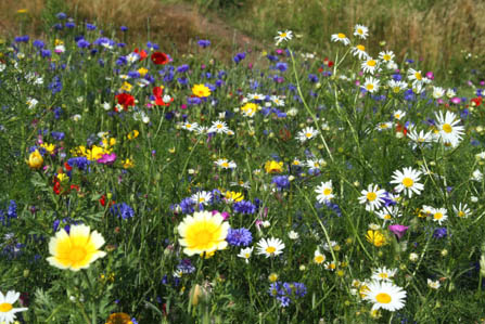 06 Meadow Planting in Your Garden_2