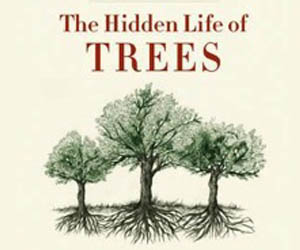 The Hidden Trees Of Life