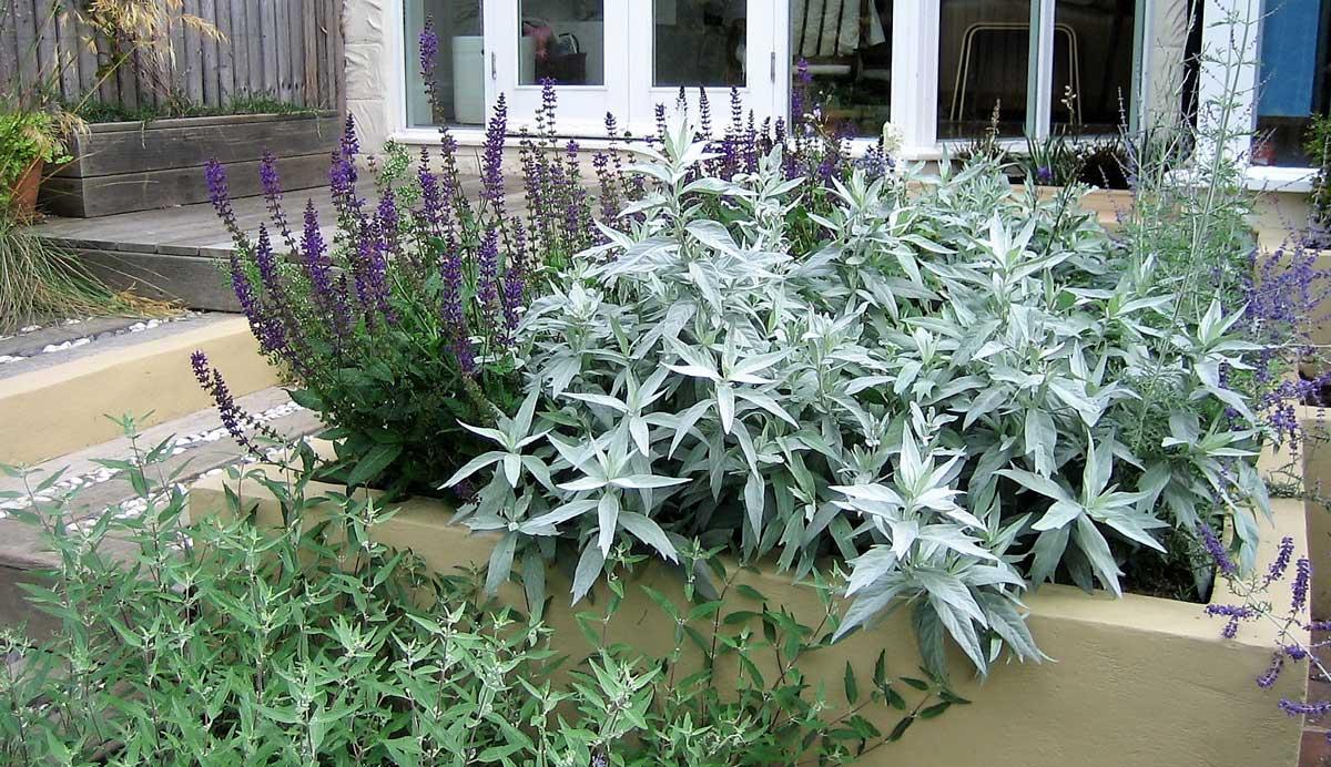 Chic_courtyard_garden_Oakwood_purple_silver_planting_4