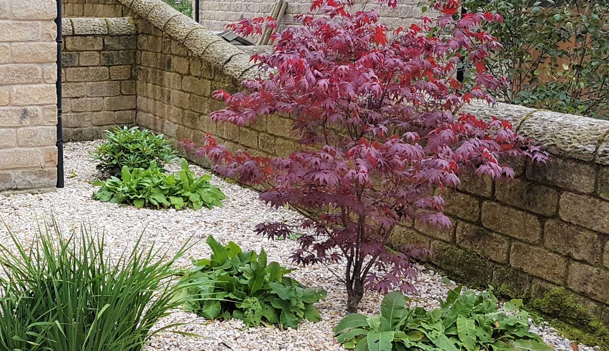 Elegant_gravel_garden_Menston_plants_ Japanese_maple _7