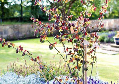 3.-Large_open_front_garden_Adel_-cercis
