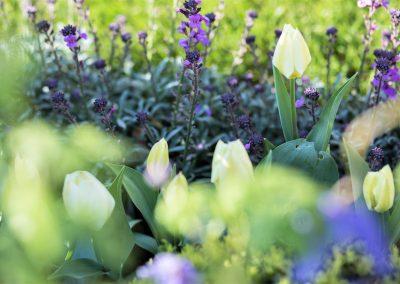 5. Harrogate Flower Show_2016_planting_1