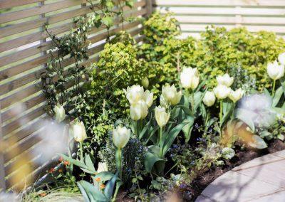 6. Harrogate Flower Show_2016_tulips_2