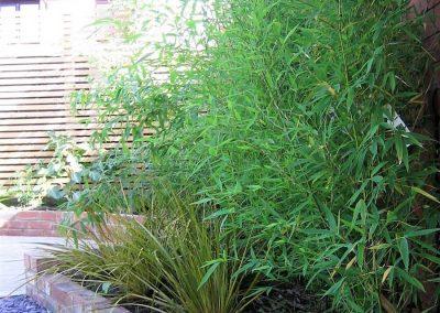 6.-Lush_entertaining_garden_West_Park_bamboo
