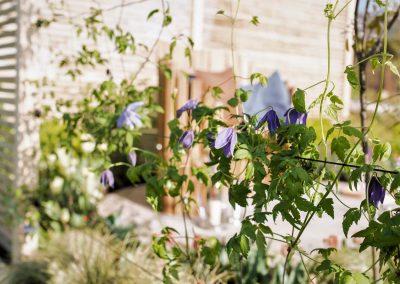 8. Harrogate Flower Show_2016_clematis alpina_1
