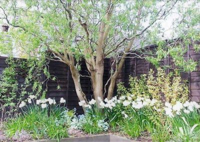 8.--Year_round_garden_Meanwood_willow