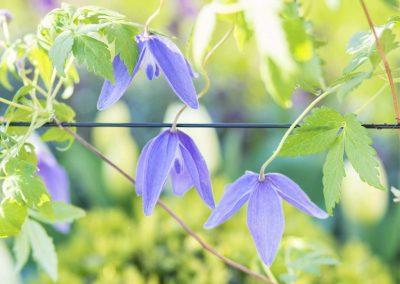 9. Harrogate Flower Show_2016_wiring_1