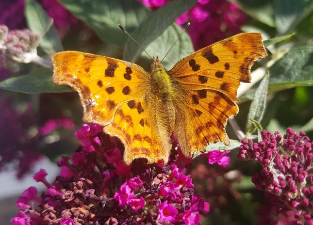 North-Leeds-Garden-Design-Comma