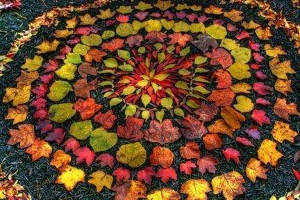 An Autumn half term Leaves
