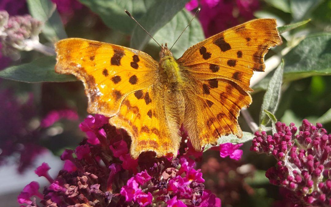 How to Encourage Wildlife into your Garden