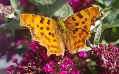 How to Encourage Wildlife into your Garden
