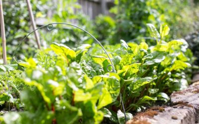 The Edible Gardener