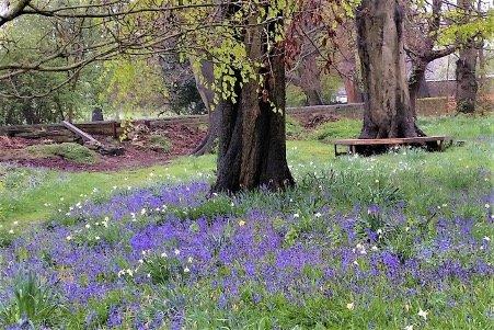 Spring is sprung_crocus