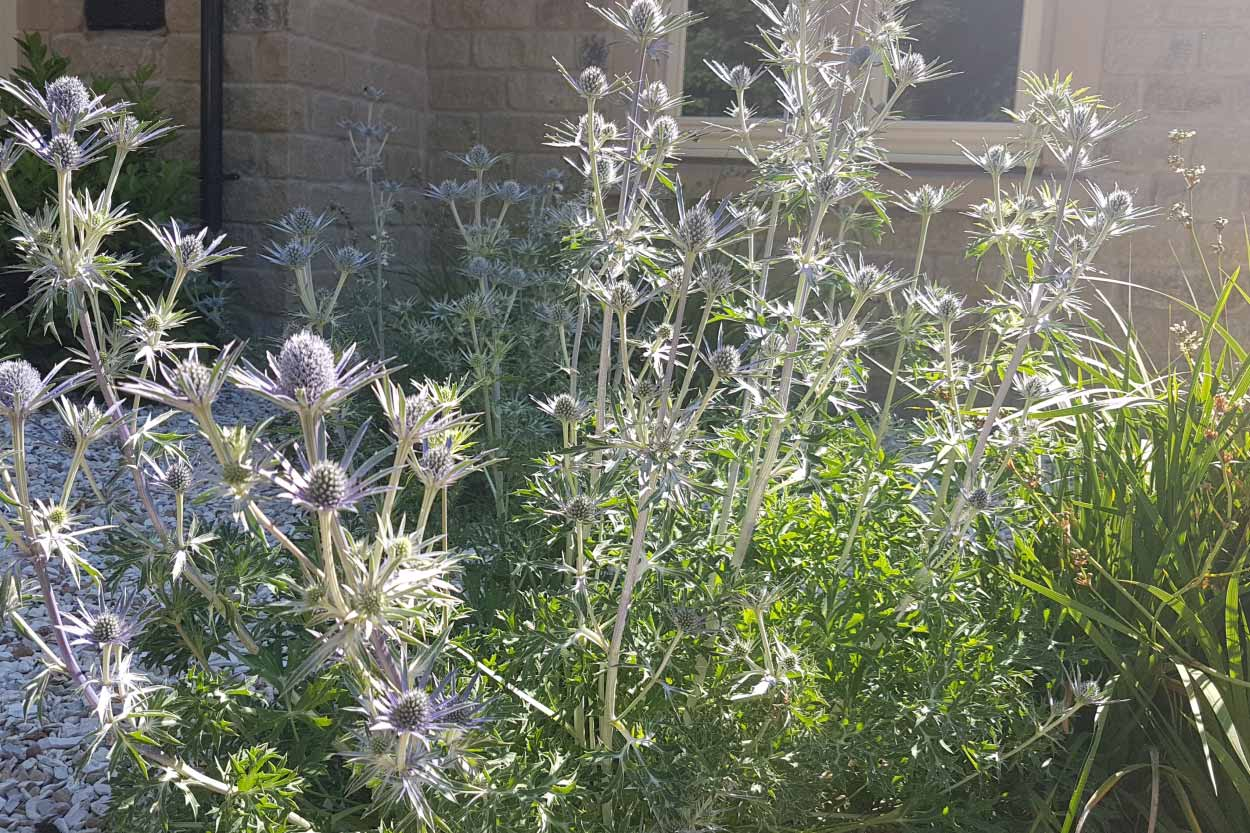 Elegant-Gravel-Garden-Menston-5