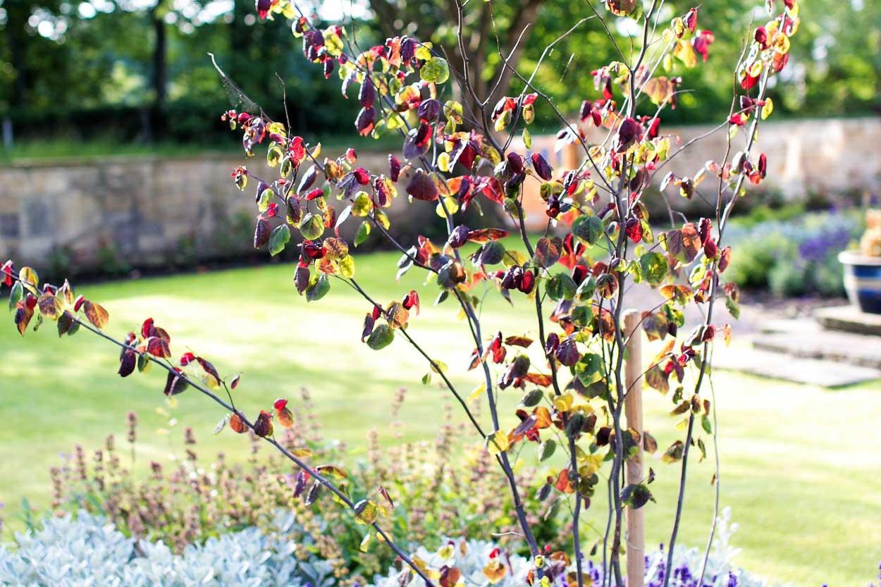 Low-maintenance-large-garden-5