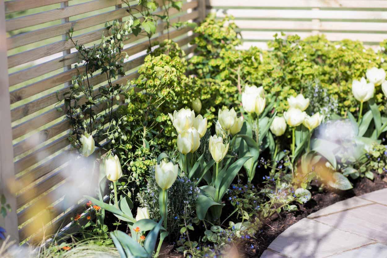 Transition-Garden-5