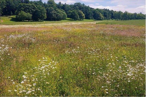 Lowther_Castle_&_Gardens_castle_meadows