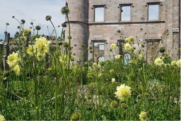 Lowther_Castle_&_Gardens_cephalaria_gigantea_castle parterre