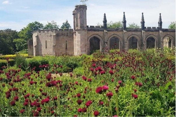 Lowther_Castle_&_Gardens_cirsium_rivulare-atropurpureum_castle_parterre