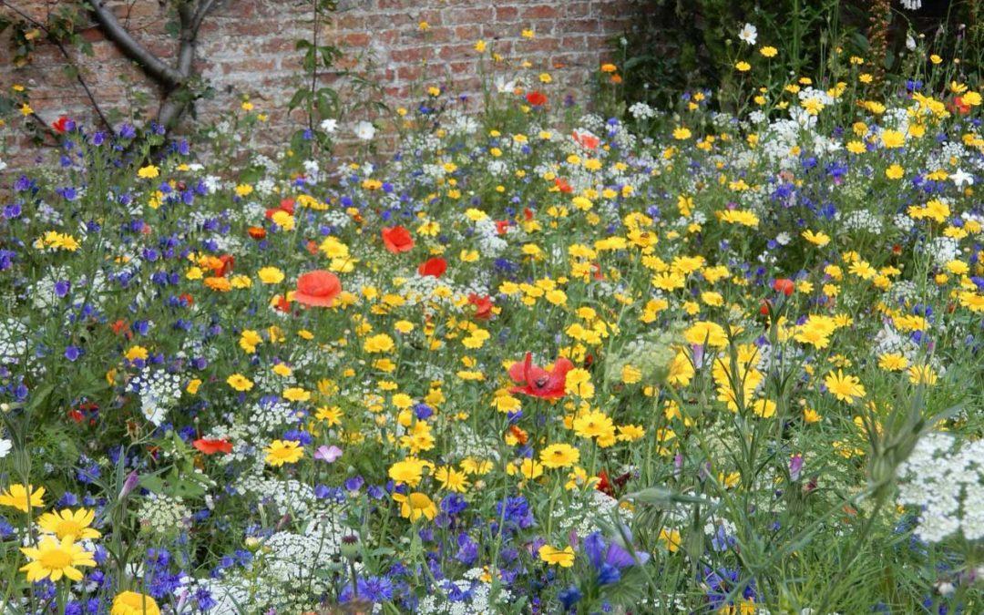 Glorious Wildflower Meadows