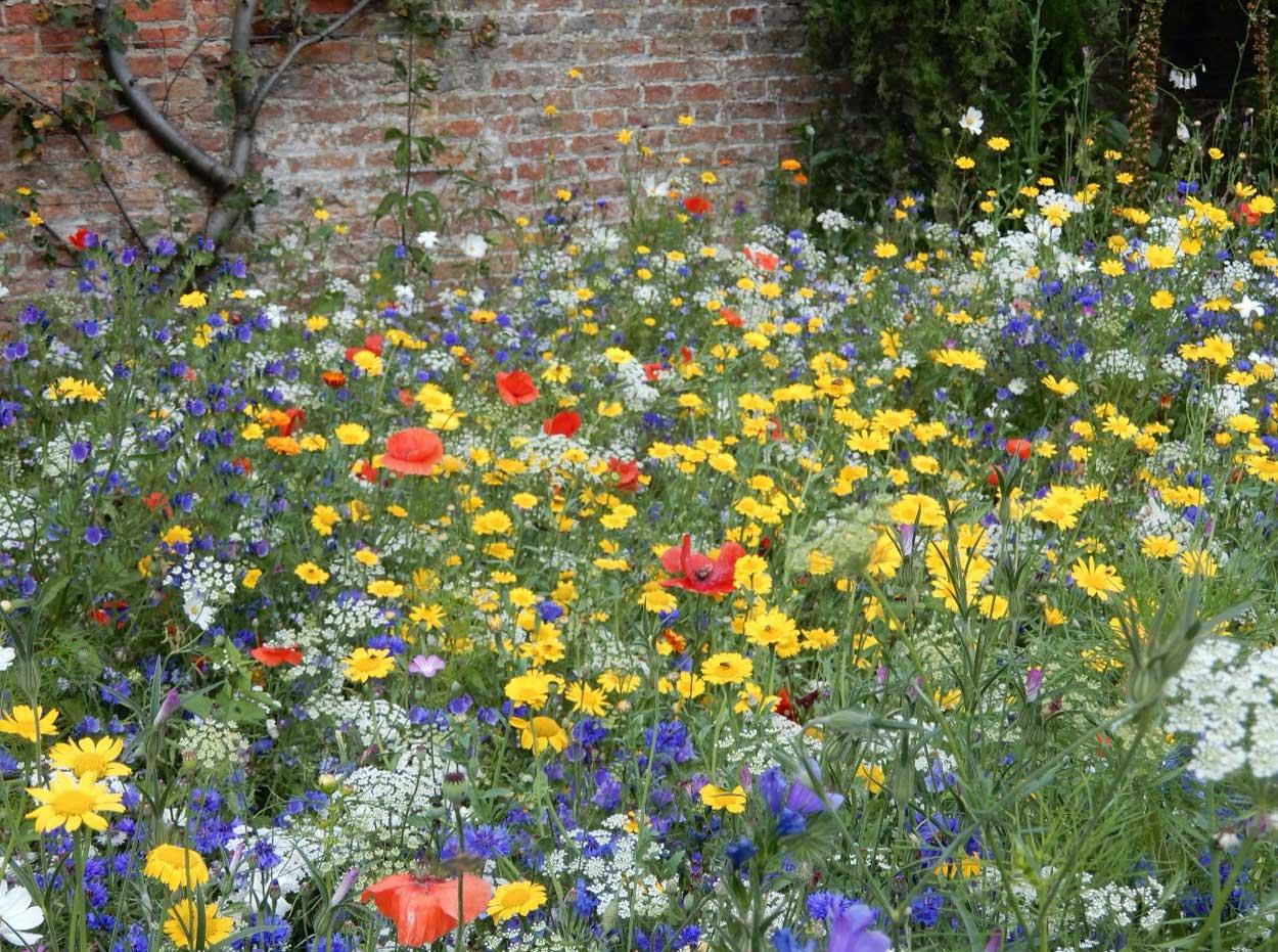 Glorious-wildflower-meadows_1_edit
