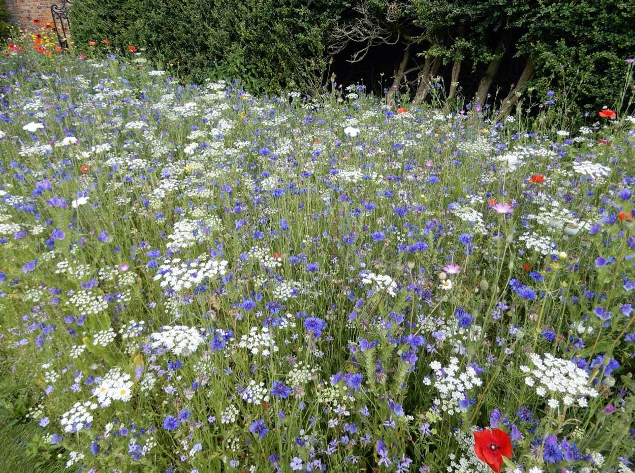 Glorious-wildflower-meadows_4_edit