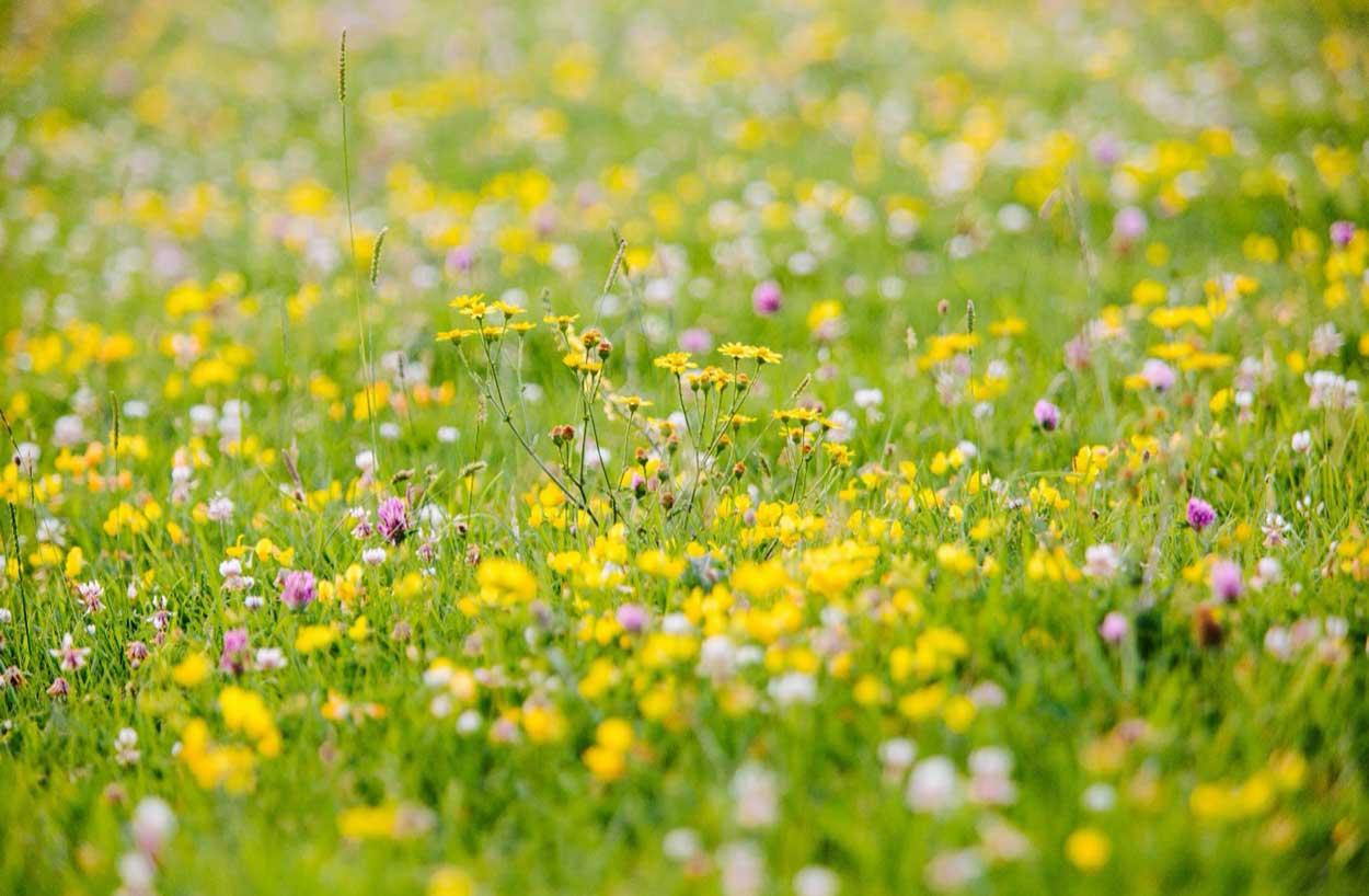 Glorious-wildflower-meadows_5